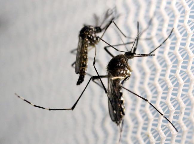 Cửa lưới inox – thổi bay nỗi lo dịch bệnh mùa mưa ẩm