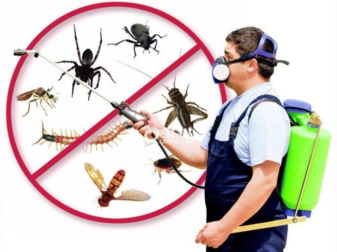 thay thế thuốc diệt côn trùng bằng cửa chống côn trùng