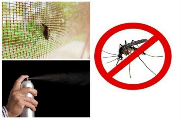 Cửa chống côn trùng - Giải pháp triệt để cho ngôi nhà của bạn!
