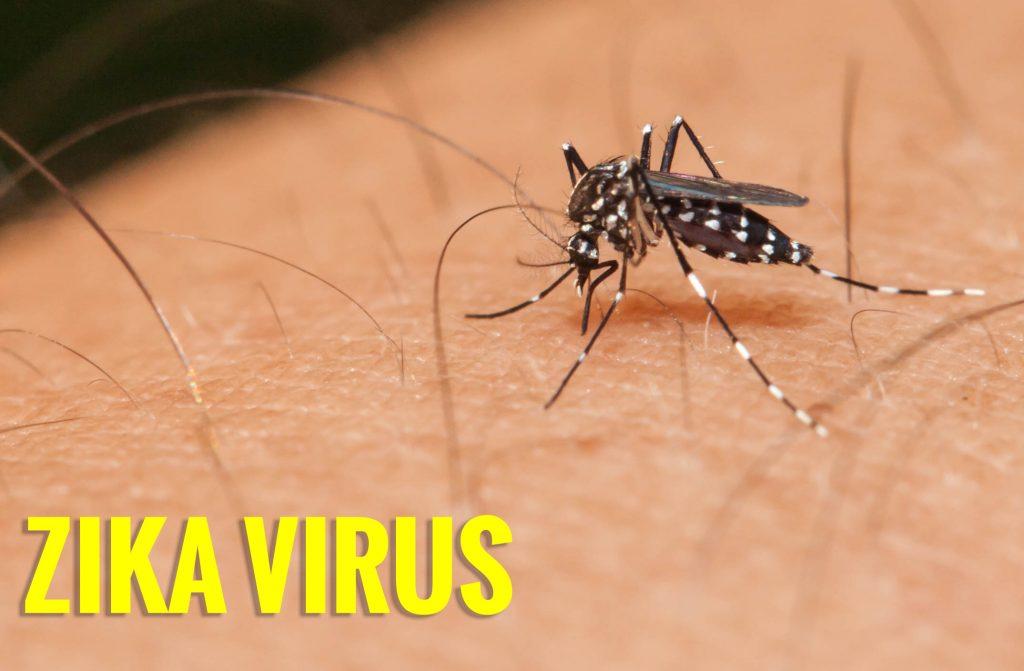 Virút ZIka do muỗi truyền bệnh gây teo não rất nguy hiểm cho thai nhi